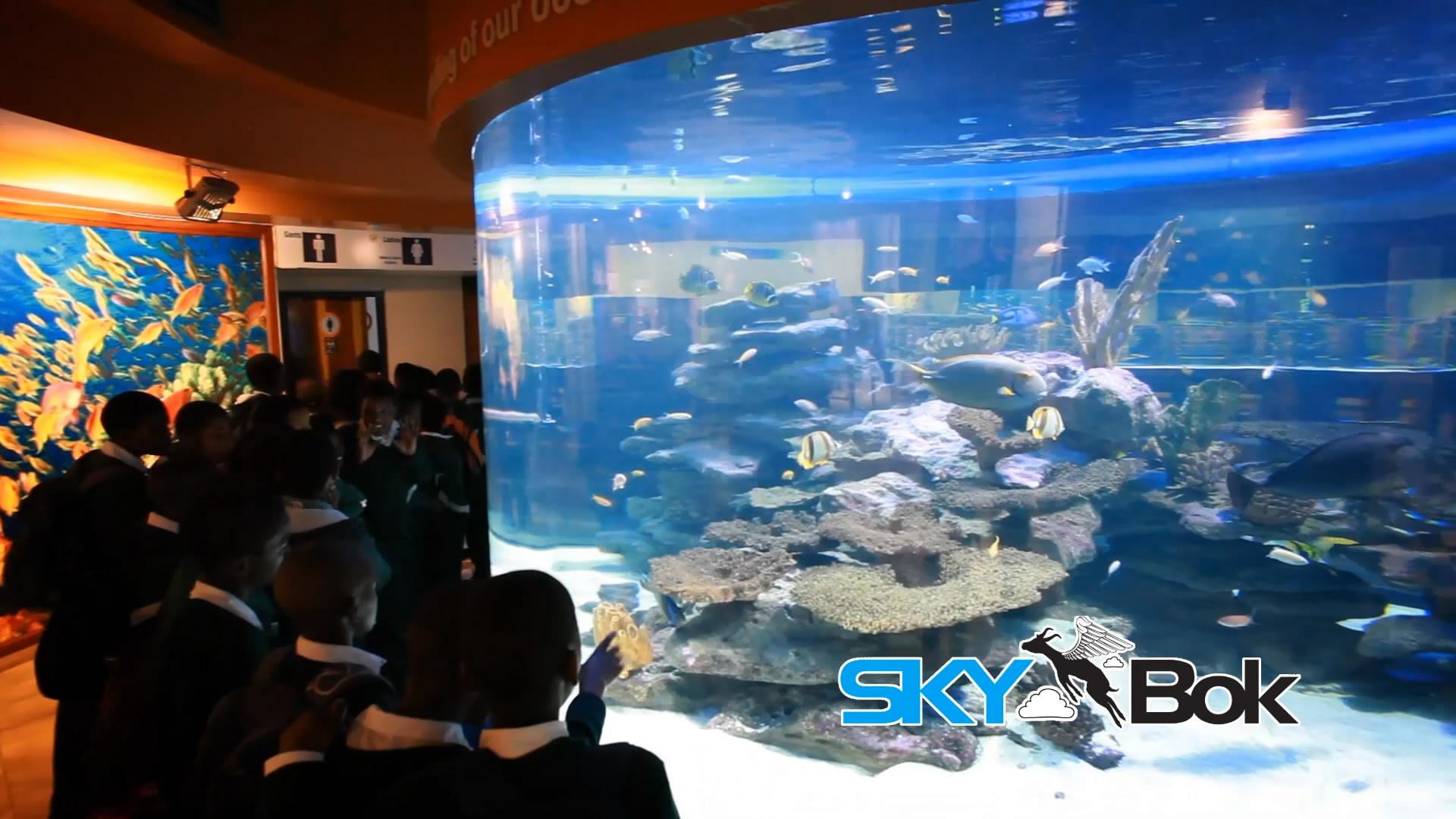 Freshwater aquarium fish cape town - Advertisements