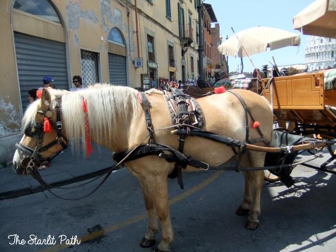 Pisa Tuscany Italy Travel