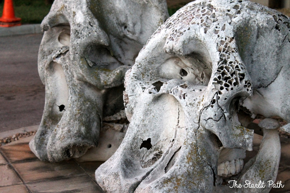 Addo Elephant Park African Safari
