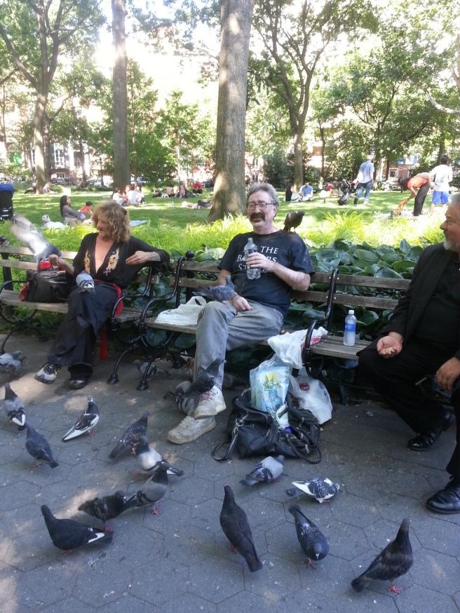 Pigeons in Washington Square Park