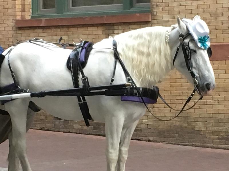 Do San Antonio: Horse + CarriageRides