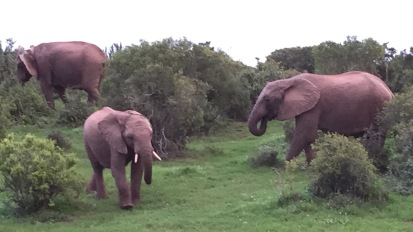 Chasing elephants in a South African gamepark