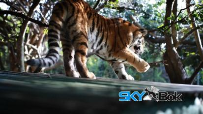 Seaview Lion Park in Port Elizabeth, SouthAfrica
